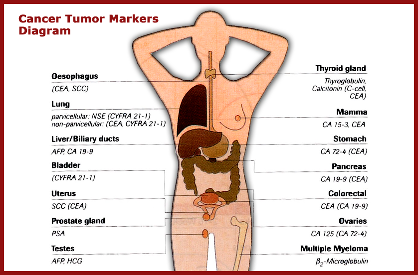 Cancer Markers Up